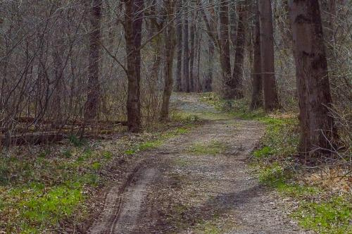 5apr2015_beaver-pond-trail-1